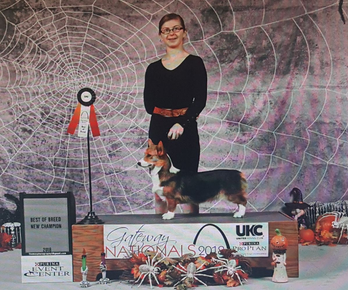 UKC GRCH VINTAGE UNCONTESTED STAR POWER