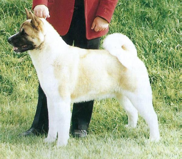 AKC/UK CH Goshen's Bigger Is Better At Redwitch