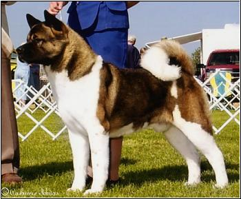 AKC CH Crown Royals Times OfTheSign